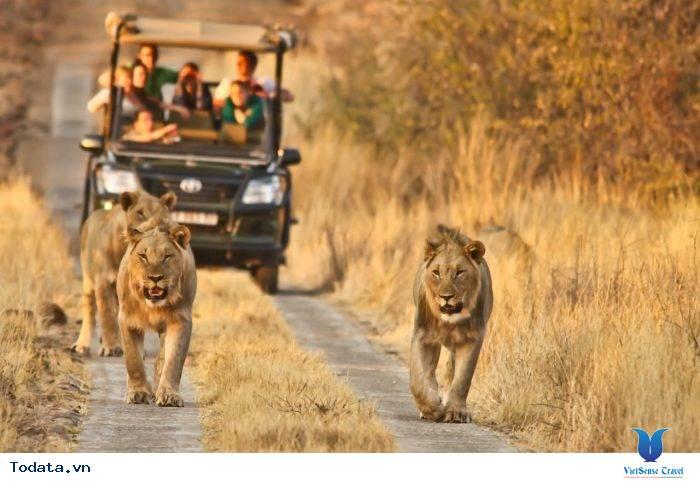 Những Lý Do Khiến Bạn Muốn Lên Lịch Hẹn Với Nam Phi Ngay Hè Này