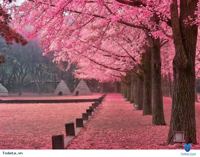 Đến Hàn Quốc – Đừng bỏ lỡ 3 địa điểm yên bình giữa lòng thành phố.