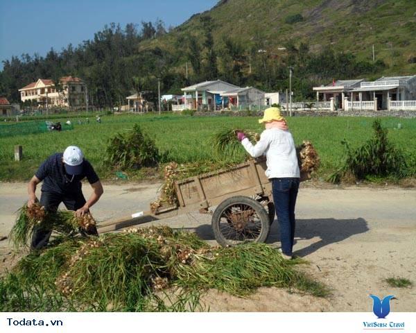 Du lịch đảo Lý Sơn vào mùa thu hoạch tỏi