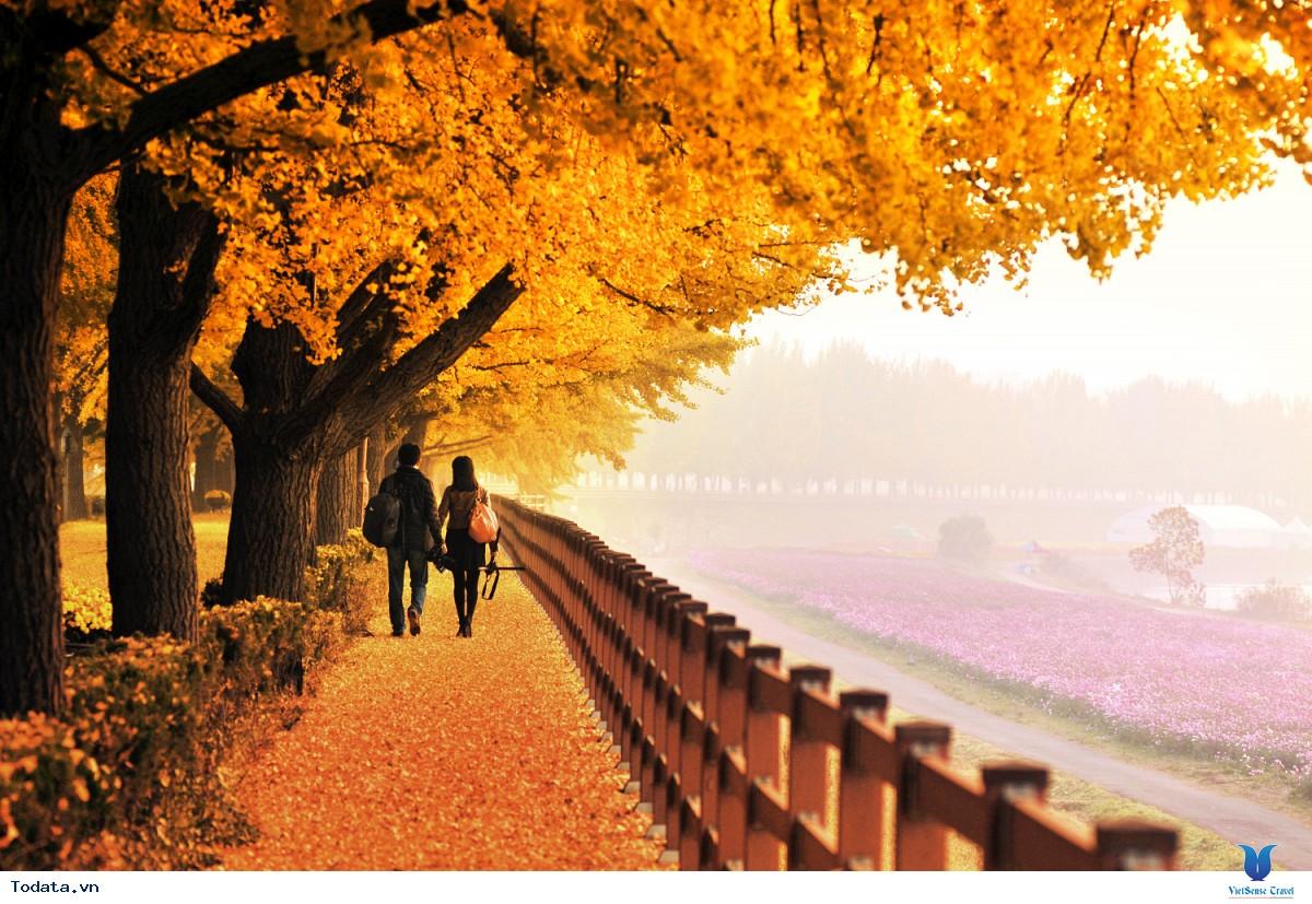 Du lịch Hàn Quốc Mùa lá đỏ Seoul - Everland - Nami - N Tower 5n4d