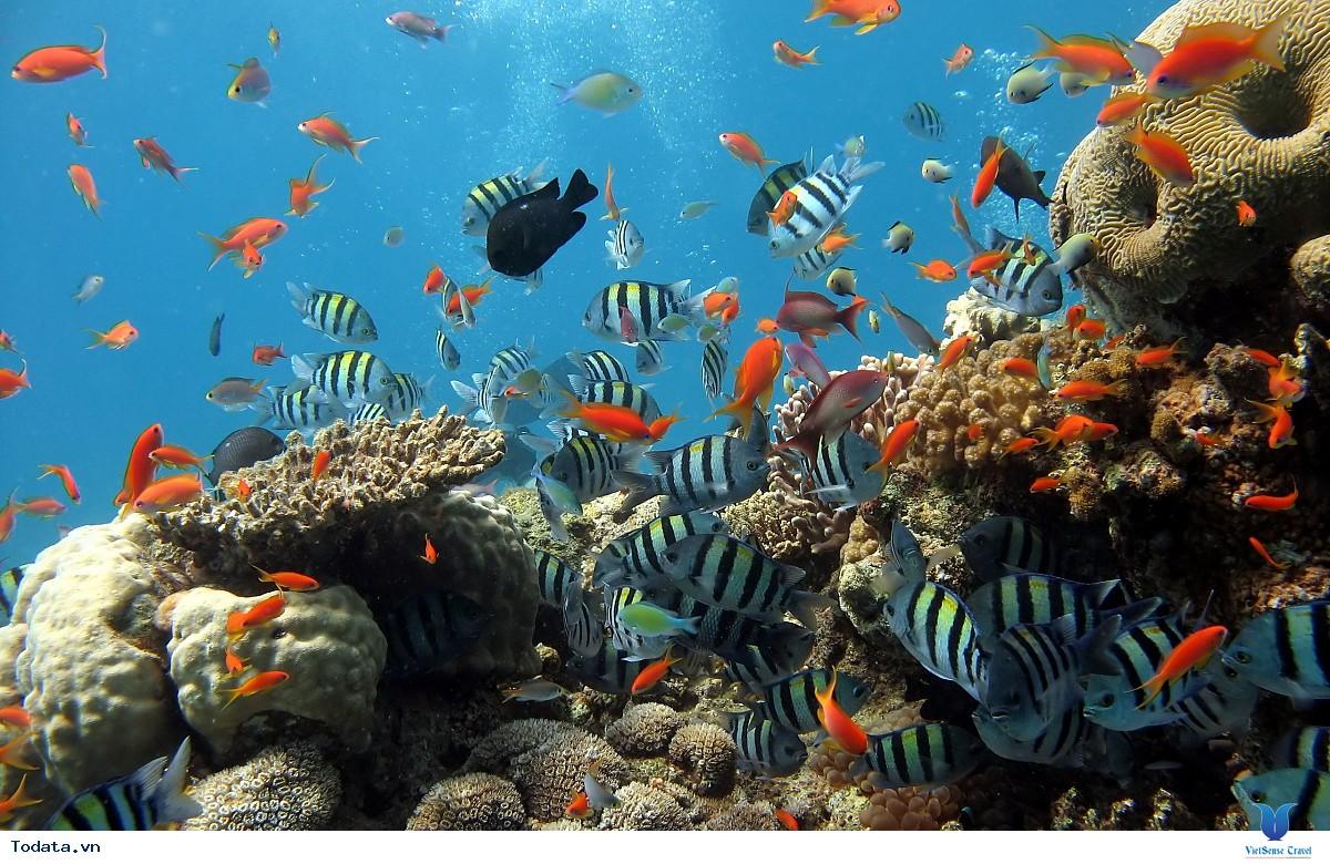 khám phá thiên nhiên kỳ thú tại côn đảo
