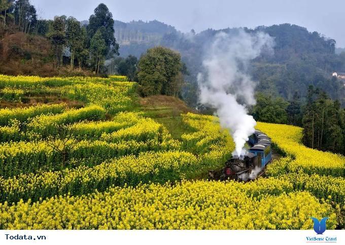 Lộng lẫy với thảm cải hoa vàng ở Trung Quốc
