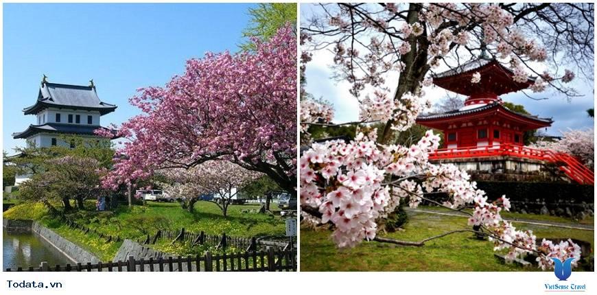 Ngắm hoa anh đào Nhật Bản ở đâu là lý tưởng nhất – Phần 1