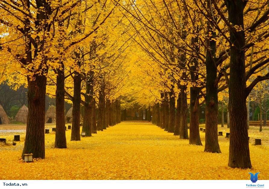 Những lý do bạn không nên bỏ qua Hàn Quốc trong mùa thu này