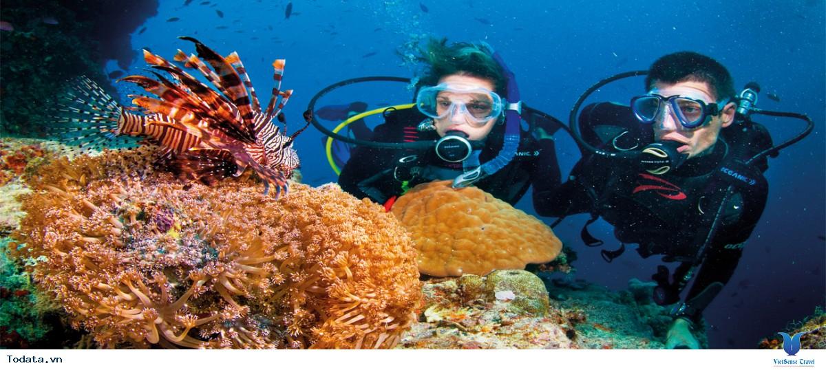 Tour Nam Đảo Phú Quốc Câu Cá - Lặn Ngắm San Hô