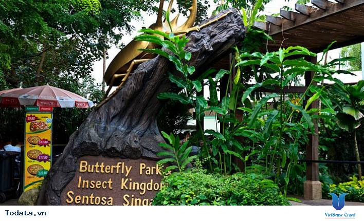 Thư viện ảnh Butterfly park and Insect kingdom