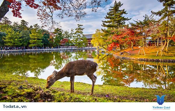 Thư viện ảnh Công viên Nara
