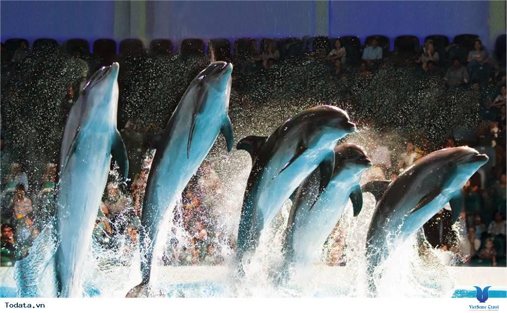 Thư viện ảnh Dubai Dolphinarium