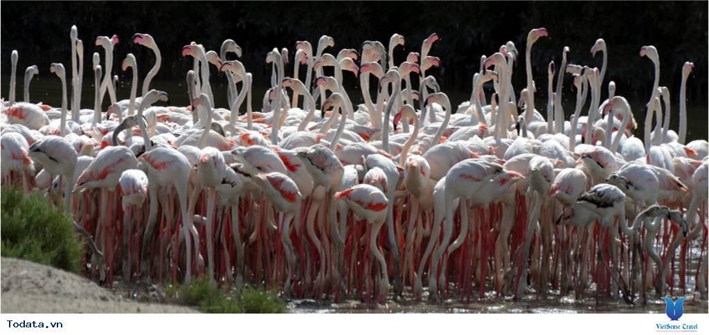Thư viện ảnh Khu bảo tồn động vật hoang dã Ras Al Khor