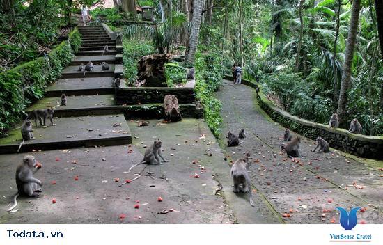 Thư viện ảnh Khu rừng khỉ - Alas Kedaton
