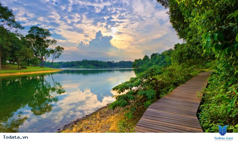 Thư viện ảnh MacRitchie Nature Trail & Reservoir Park
