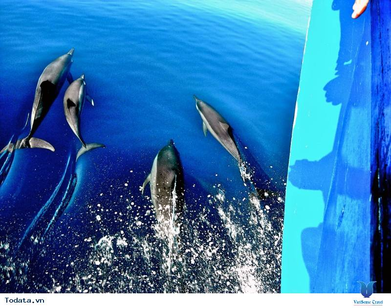 Thư viện ảnh Sunset Dolphin Cruise