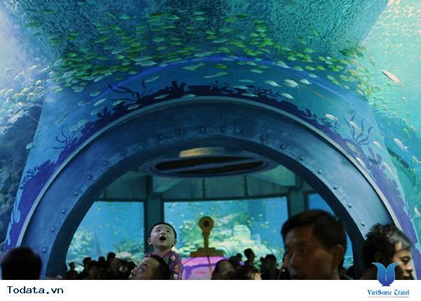 Thư viện ảnh Viện Hải Dương Học Nha Trang
