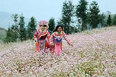 Cao nguyên đá- ngàn hoa khoe sắc