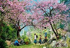 Có những mùa hoa đẹp khó cưỡng ở Mộc Châu!