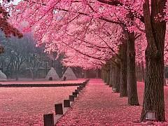 Những địa điểm thú vị tại Hàn Quốc