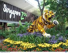 Ghé Thăm Vườn Thú Hoang Dã Đẹp Nhất Singapore (Singapore Zoo)