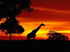 Kinh Nghiệm Du Lịch Đến Night Safari