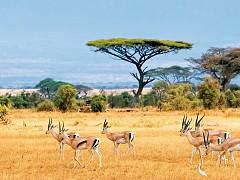 Mùa nào đẹp để đi Nam Phi