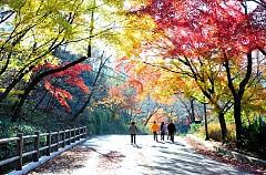 Những điểm du lịch Hàn Quốc đẹp nhất khi sắc trời vào thu