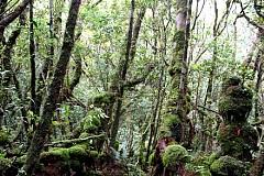Tham quan khu sinh thái Xẻo Quýt ở Đồng Tháp