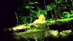 Tham Quan Vườn Thú Night Safari