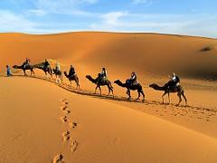 Trải Nghiệm Có 1 Không 2 Trên Sa Mạc Safari