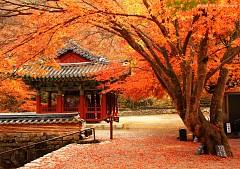 Vi vu Hàn Quốc ngắm mùa thu lá đỏ nhuộm màu trời
