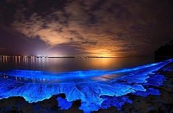 Bãi Biển Phát Sáng ảo diệu Tại Maldives có gì đẹp?