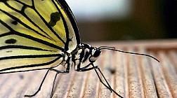 Butterfly park and Insect kingdom, thế giới của loài bướm
