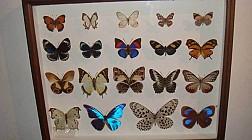 Butterfly park and Insect kingdom, vương quốc của loài bướm và côn trùng