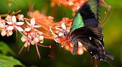 Butterfly park and Insect kingdom xinh đẹp trên đảo Sentosa