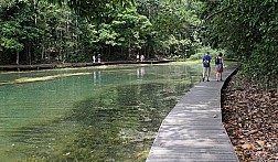 Cây cầu dài tít tắp ở MacRitchie Nature Trail & Reservoir Park