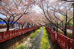Changwon- Thành Phố Của Nghệ Thuật