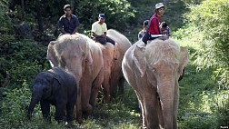 Chùa Voi Trắng Myanmar và những chú voi trắng ngoài đời thường