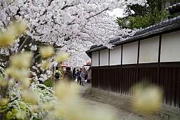Con Đường Của Nhà Triết Học Ở Nhật Bản