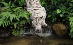 Công viên hoang dã duy nhất ở Châu Á, River Safari