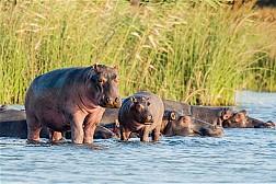 Công viên ngập mặn iSimangaliso