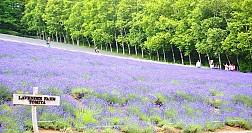 Hành trình di sản - Rực rỡ mùa hè Nhật Bản 5n4d