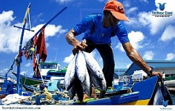 Du lịch tham quan chợ cá Male