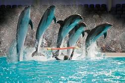 Dubai Dolphinarium- Điểm Tham Quan Hào Nhoáng Ở Dubai