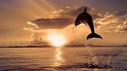 Hành Trình Sunset Dolphin Cruise