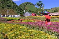 Happy Land Mộc Châu Thiên Đường Trên Cao Nguyên
