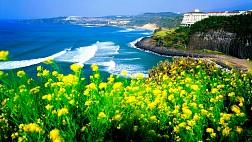 Hình Ảnh Đảo Jeju