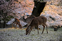 Khám Phá Công Viên Nara Cổ Kính