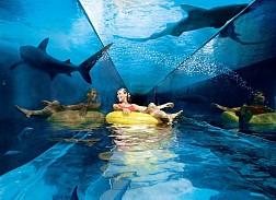 Khám Phá công Viên Nước Giải Trí Nổi Tiếng Dubai Aquaventure Park