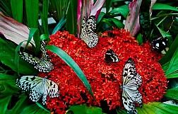 Khám phá khu Vườn Bướm đầy màu sắc