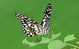 Khu vườn nhiệt đới Butterfly park and Insect kingdom