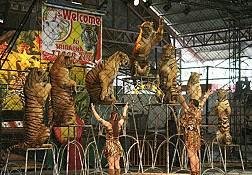 Lựa chọn đúng đắn khi đến Sriracha Tiger Zoo