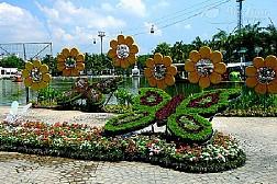 Mê hoặc trong vườn bướm Thái